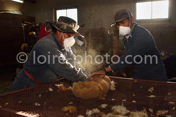 Argentina, Ju Juy, Vicugna Shearing